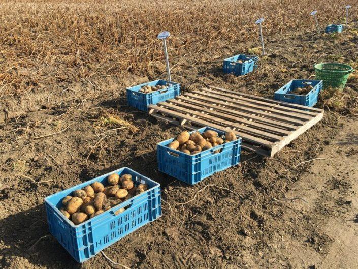 26 september 2016: proefveld aardappelen Semagri geoogst