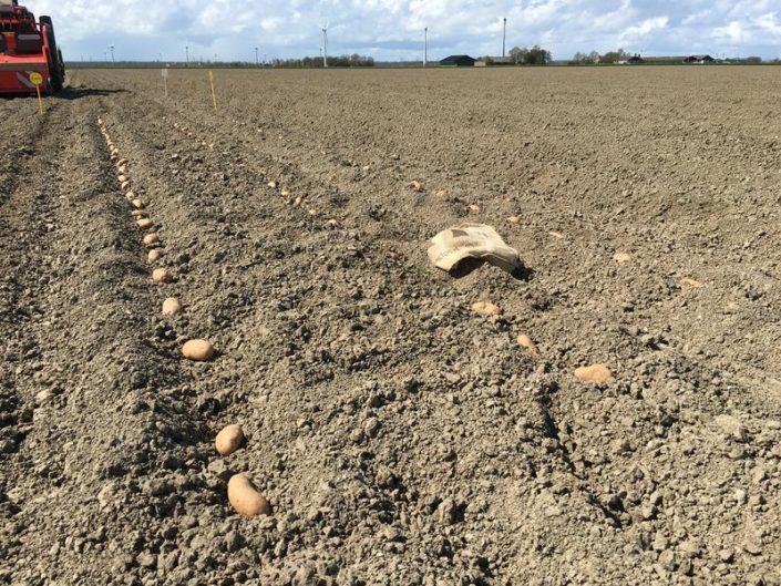 23 april 2016: aardappels gepoot