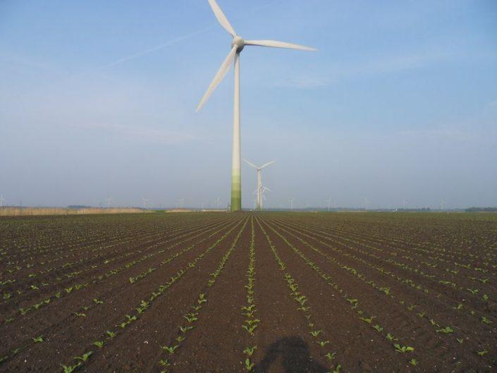 Gewasgroei suikerbieten 2011