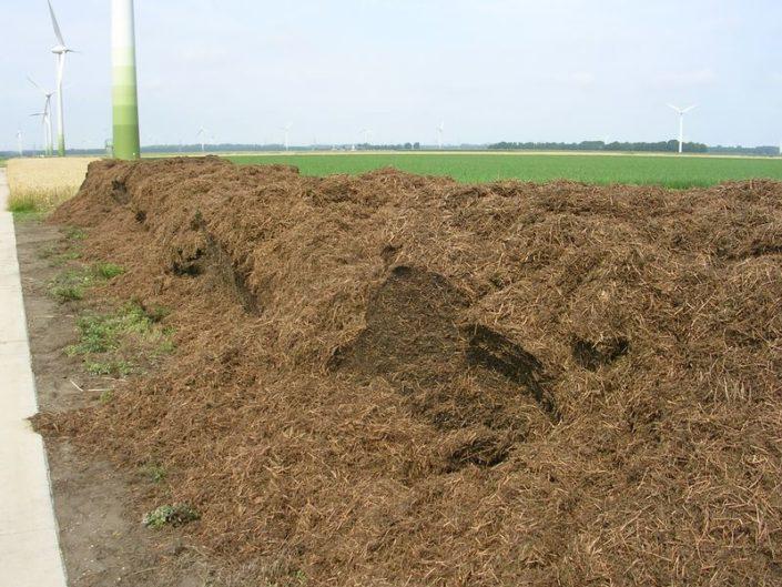 27 juli 2008; oregano oogst