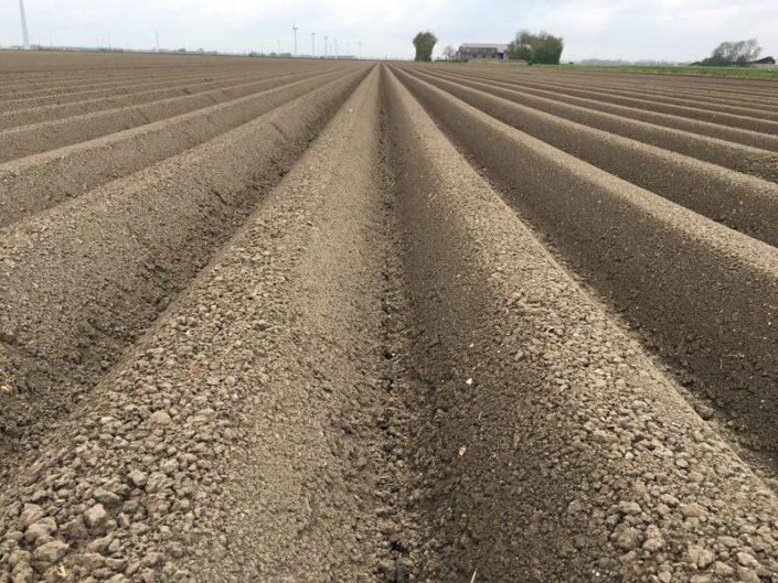 Gewasgroei aardappelen 24 april 2017