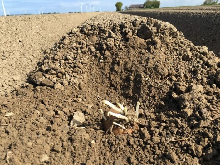 9 mei 2017; gewasgroei aardappelen eurostar