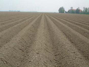Gewasgroei aardappelen 2002