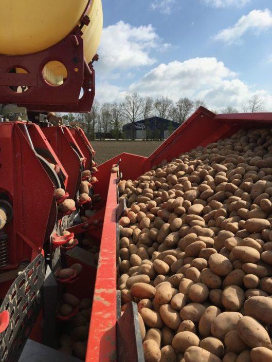 6 en 7 april 2017; 6,5 ha aardappels gepoot