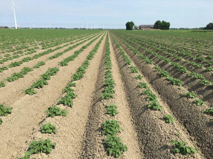 29 mei 2017 gewasgroei aardappelen ras is: Eurostar