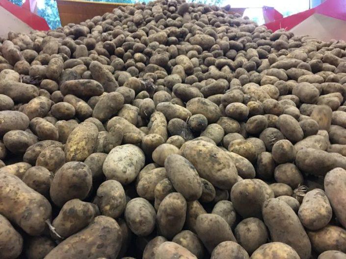 1 juli 2017; Aardappels oogst 2016 afgeleverd
