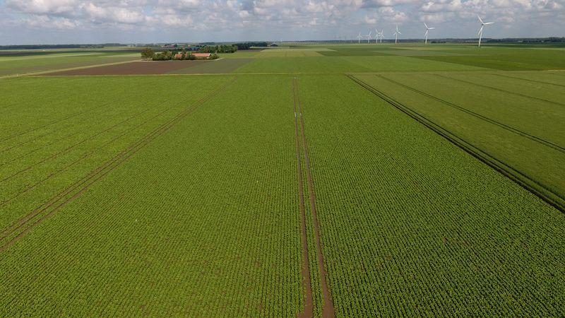 9 juni 2017; gewasgroei suikerbieten ras is BTS 990
