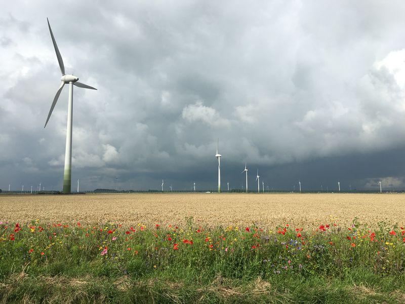 Harrysfarm-Swifterbant-Flevoland-24 juli 2017-gewasgroei-suikerbieten-uien-aardappelen-wintertarwe-akkerrand-IMG_8825