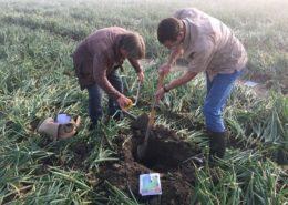 Harrysfarm-Swifterbant-Flevoland-16 augustus 2017-zicht op de bodemstructuur-Flevolands agrarisch collectief-FAC-bodem-IMG_9151