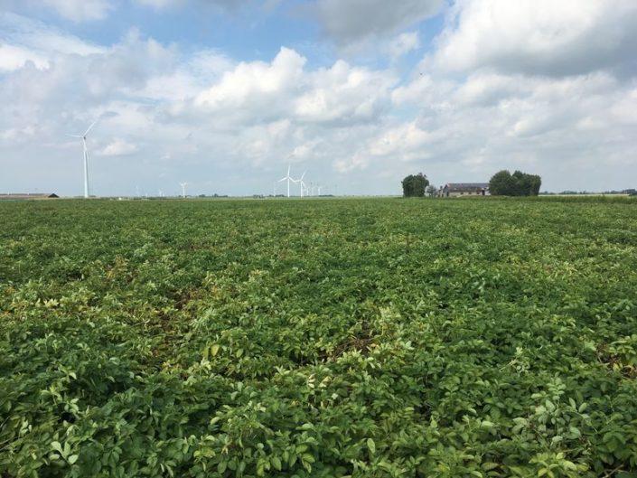 10 september 2017; gewasgroei aardappelen, ras is Eurostar