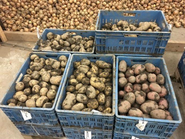 28 september2017; aardappel proefveld Semagri geoogst