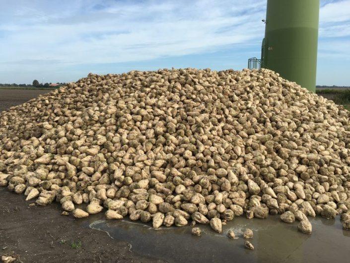 4 oktober 2017; Proefveld suikerbieten eruit