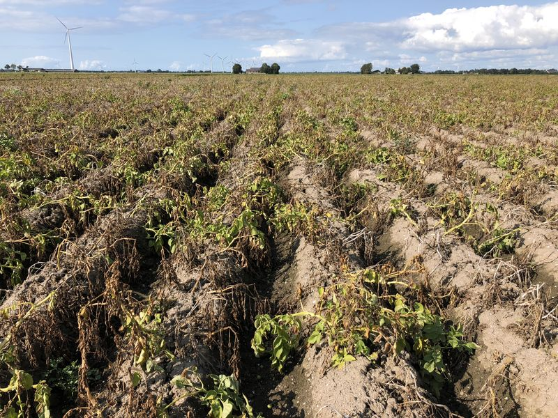 31 augustus 2018; 4e proefrooiing aardappelen, ras is Innovator
